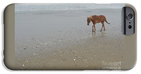 The Horse iPhone Cases - Horse on Corolla iPhone Case by Lynn R Morris