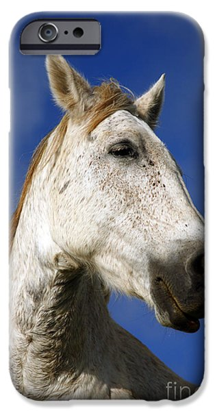 Horses iPhone Cases - Horse portrait iPhone Case by Gaspar Avila