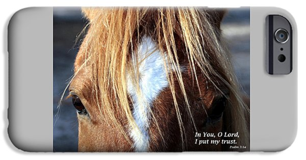 Florida Wildlife iPhone Cases - Horse /Trust iPhone Case by W Gilroy