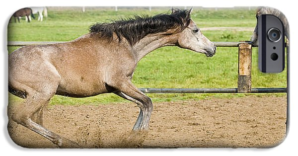 Horse iPhone Cases - Horses - Break iPhone Case by Andy-Kim Moeller