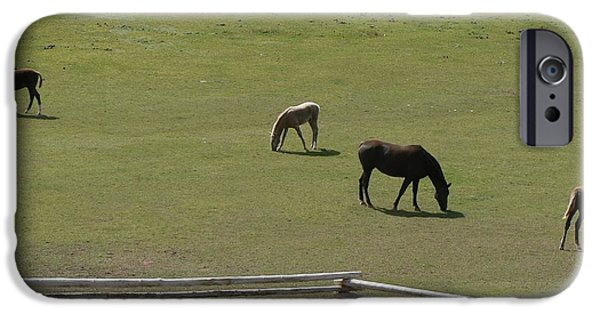 Meadow Photographs iPhone Cases - Horses Grazing iPhone Case by Judy Schneider