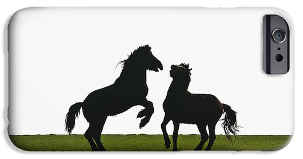 Field. Cloud iPhone Cases - Horses Playing In A Field Near Abermawr iPhone Case by Paul Quayle