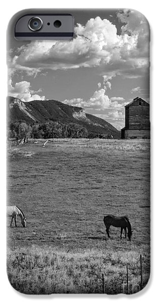 Agricultural iPhone Cases - Horses Grazing at Mancos Grain Elevator iPhone Case by Priscilla Burgers