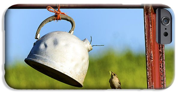 Parental Care iPhone Cases - House wren feeding Offspring iPhone Case by Thomas R Fletcher