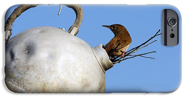 Abandonment iPhone Cases - House Wren in New Home iPhone Case by Thomas R Fletcher