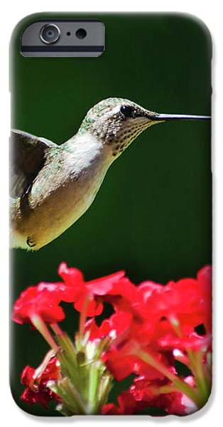 Hovering Hummingbird iPhone Case by Christina Rollo