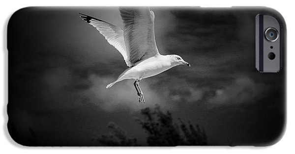 Sea Birds iPhone Cases - Hovering Seagull iPhone Case by Vickie Emms
