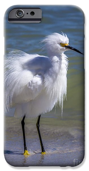 Snowy Egret iPhone Cases - How Do I Look iPhone Case by Marvin Spates