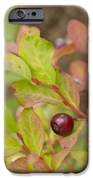 Huckleberry iPhone Case by Idaho Scenic Images Linda Lantzy