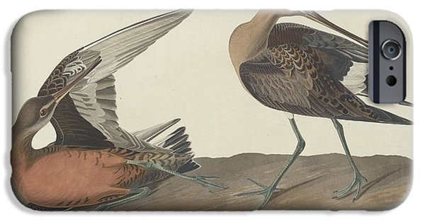 Seagull Drawings iPhone Cases - Hudsonian Godwit iPhone Case by John James Audubon