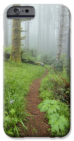 Scott Nelson Photographs iPhone Cases - Humbug iPhone Case by Scott Nelson