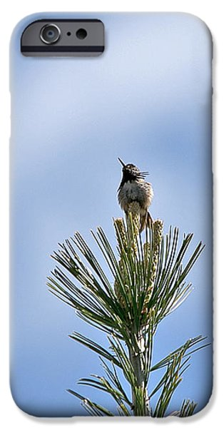 Animals Photographs iPhone Cases - Hummingbird atop iPhone Case by MaJoR  Images