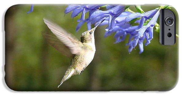 Flight iPhone Cases - Hummingbird iPhone Case by Mary Halpin