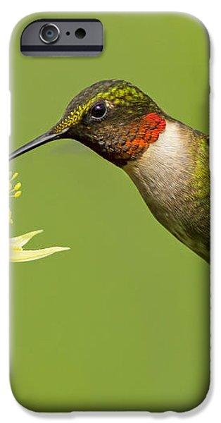 Hummingbird iPhone Case by Mircea Costina Photography