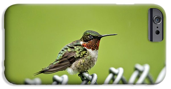 Archilochus Colubris iPhone Cases - Hummingbird on a Fence iPhone Case by Christina Rollo