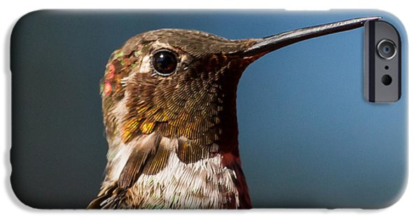 Little iPhone Cases - Hummingbird portrait  iPhone Case by Max Rose