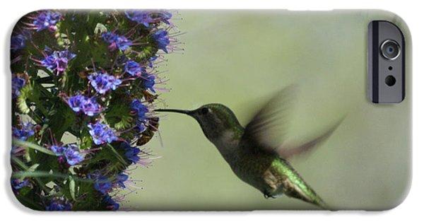 Feeding Birds iPhone Cases - Hummingbird Sharing iPhone Case by Ernie Echols
