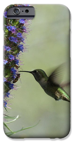 Hummingbird Sharing iPhone Case by Ernie Echols