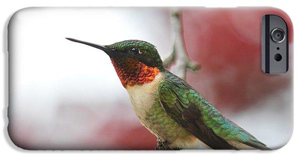 Archilochus Colubris iPhone Cases - Hummingbird Watch Tower iPhone Case by Lara Ellis