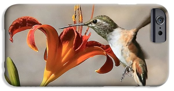 Day Lilies iPhone Cases - Hummingbird Whisper  iPhone Case by Carol Groenen