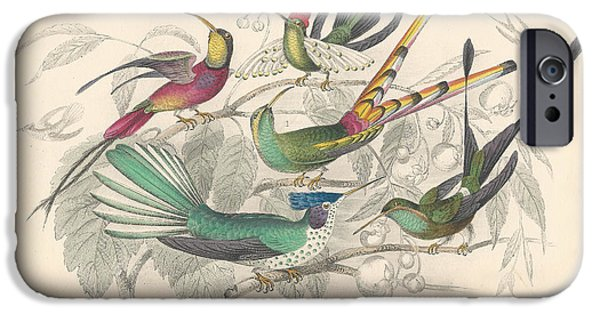 Antiques Drawings iPhone Cases - Hummingbirds iPhone Case by Oliver Goldsmith