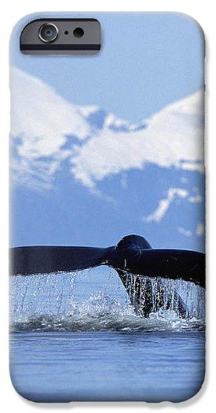 Humpback Whale Megaptera Novaeangliae iPhone Case by Konrad Wothe