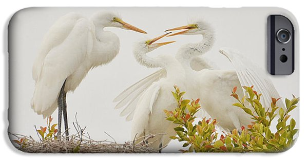 Fed Photographs iPhone Cases - Hungry Chicks 2 iPhone Case by Fraida Gutovich