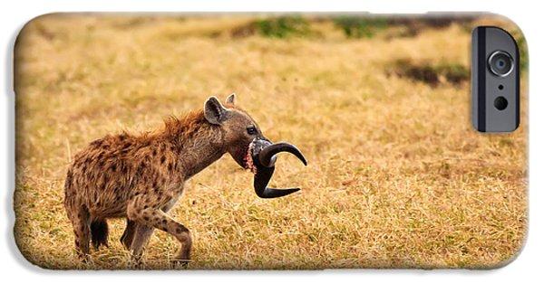 Ngorongoro Crater iPhone Cases - Hungry Hyena iPhone Case by Adam Romanowicz