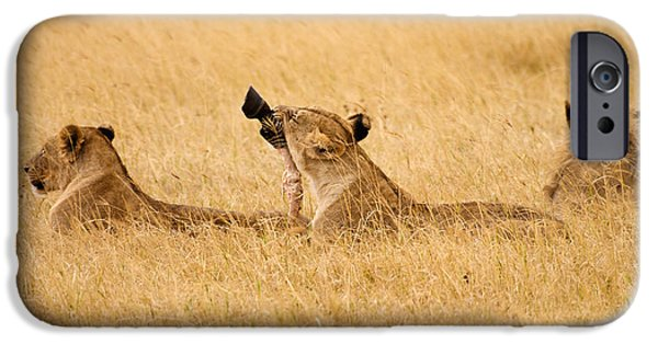 Ngorongoro Crater iPhone Cases - Hungry Lions iPhone Case by Adam Romanowicz