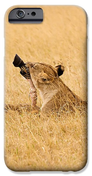 Hungry Lions iPhone Case by Adam Romanowicz