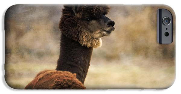 One iPhone Cases - Hunter Alpaca Herd Sire iPhone Case by Janice Rae Pariza
