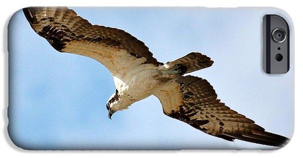 Bird In Flight iPhone Cases - Hunter Osprey iPhone Case by Carol Groenen