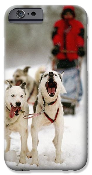 Colour Image iPhone Cases - Husky Dog Racing iPhone Case by Axiom Photographic