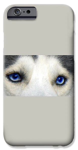 husky eyes iPhone Case by Jane Schnetlage
