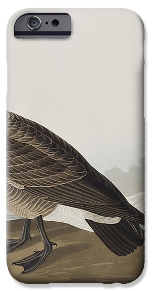 Geese iPhone Cases - Hutchinss Barnacle Goose iPhone Case by John James Audubon