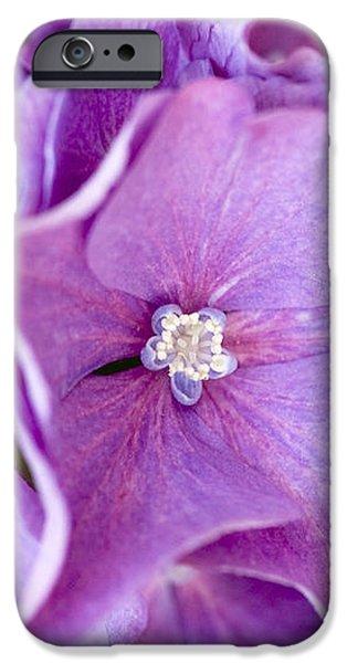 Hydrangea iPhone Case by Frank Tschakert