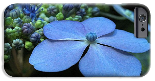 Purple Hydrangea iPhone Cases - Hydrangea iPhone Case by Juergen Roth
