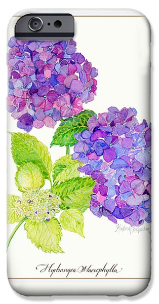 Botanical Drawings iPhone Cases - Hydrangea iPhone Case by Kimberly McSparran