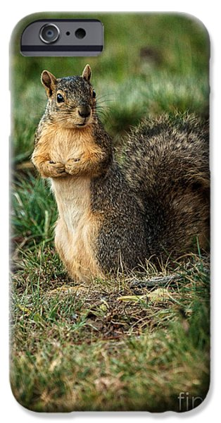 Fox Squirrel iPhone Cases - I Am So Cute iPhone Case by Robert Bales