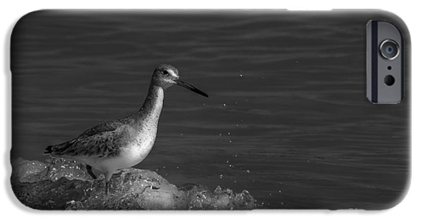 Sea Birds Photographs iPhone Cases - I Can Make It - bw iPhone Case by Marvin Spates