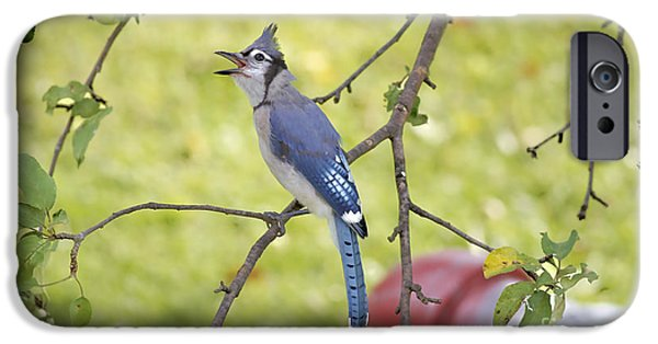 Bluejay iPhone Cases - I Have Something To Say iPhone Case by Deborah Benoit