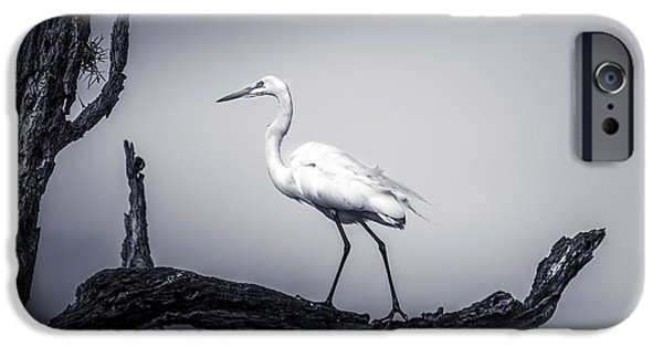 Sea Birds Photographs iPhone Cases - I Live Here iPhone Case by Marvin Spates