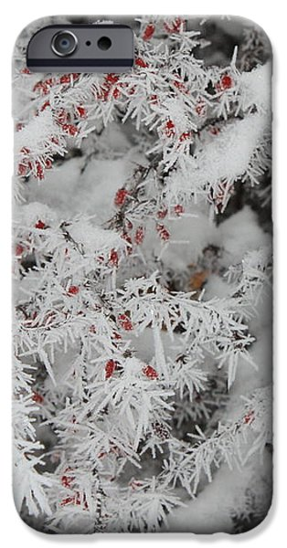 I Love Winter iPhone Case by Carol Groenen
