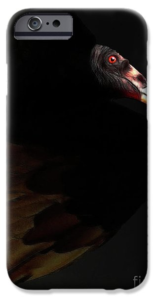 Bird In Flight iPhone Cases - I Saw The Vulture in My Dreams Again iPhone Case by Wingsdomain Art and Photography