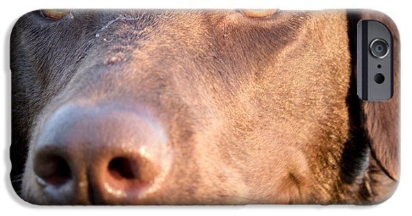 Chocolate Lab iPhone Cases - I see you iPhone Case by Agata Wisniowska