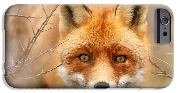 Dog Close-up iPhone Cases - I See You - Red Fox Spotting Me iPhone Case by Roeselien Raimond