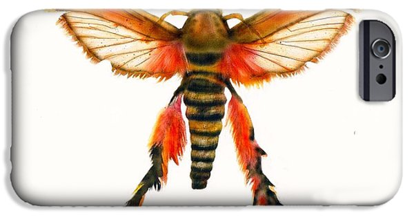 Board iPhone Cases - I Wanna Be A Macho Bug iPhone Case by Mattie O