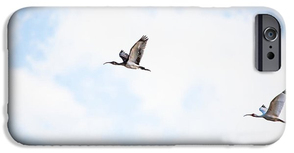 Flying Seagull iPhone Cases - Ibis on the Wing by Darrell Hutto iPhone Case by Darrell Hutto