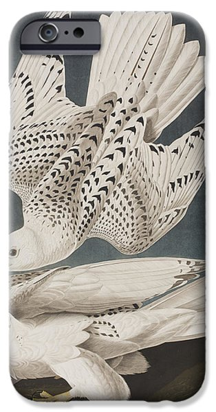 Falcon iPhone Cases - Iceland Falcon or Jer Falcon iPhone Case by John James Audubon