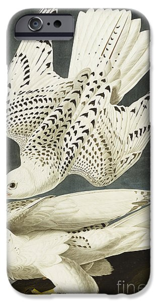 Falcon iPhone Cases - Iceland Or Jer Falcon iPhone Case by John James Audubon